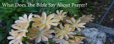 Permalink to:What Does The Bible Say About Prayer?