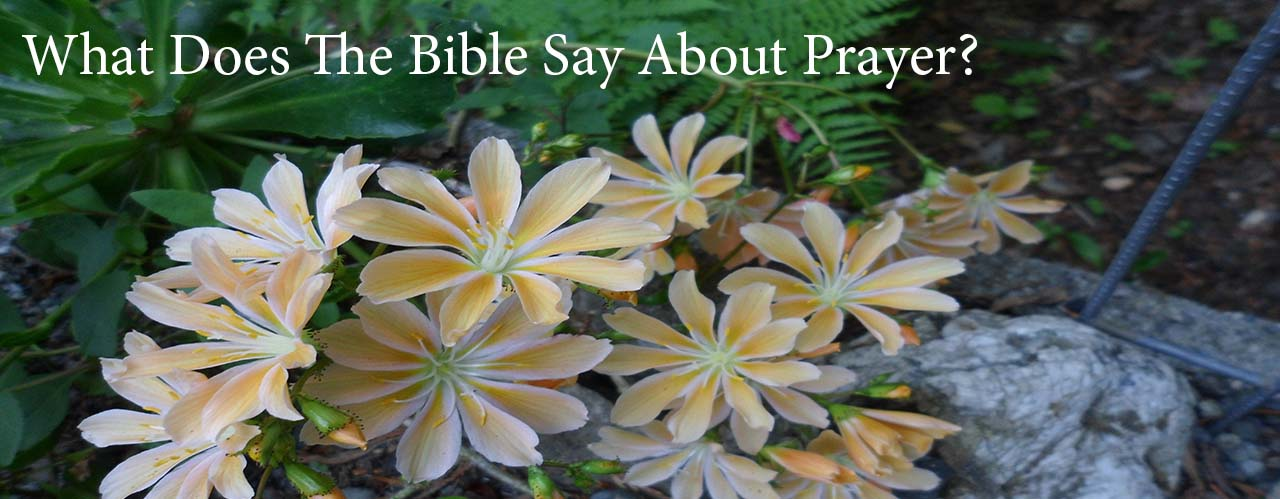 What Does The Bible Say About Prayer?