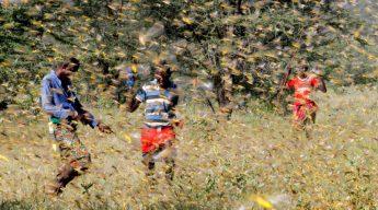 Samburu men attempt to fend-off a swarm of desert locusts flying over a grazing land in Kenya, 2020. (Image: Njeri Mwangi/Reuters)