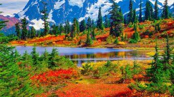 Flora of the North Cascades National Park (images, Pinterest)